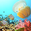 Butterflyfishes And Jellyfish by MotHaiBaPhoto Prints