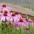 Butterfly's Lunch by Barb Morton