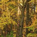 Butterscotch Autumn by Ola Allen