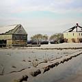 Buttonwood Farms by Jon Quinn