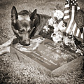 Buy A Print. Show Your Support For Reading K9 Police.  Willow Street Pictures.  by Darren Modricker