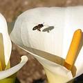 Buzz Buzz by Jez C Self