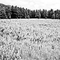 Bw Meadow by Scott Sawyer