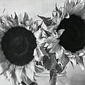 Bw Sunflowers #002 by Ninie AG
