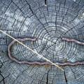 C Embedded In The Log by Tamara Kulish