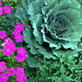 Cabbage And Vinca by Heather S Huston