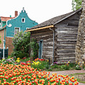 Cabin By The Tulips by Terri Morris