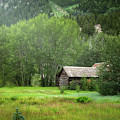 Cabin In The Aspens  by Alisha Jurgens