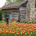 Cabin In The Tulips by Terri Morris
