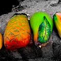 Cabo Fruit Art by Craig Incardone