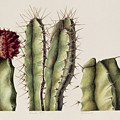 Cacti by Annabel Barrett