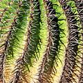 Cacti Needles by John Rizzuto