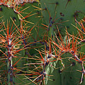 Cacti On The Orange Edge by Bruce Gourley