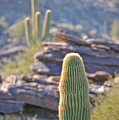 Cacti by Tom Dowd