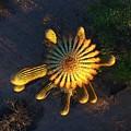 Cactu Sundown by Steve Winden
