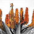 Cactus 5 by Mark Ashkenazi