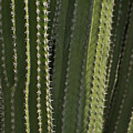 Cactus Abstract by Michael Peychich