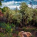 Cactus And Bird by Jon Burch Photography