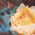Cactus Blossom 1 by Suzy Taylor