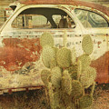 Cactus Car by Donna Lee Young