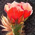 Cactus Cutie by Marilyn Smith