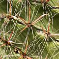 Cactus Diagonal Pattern by Jean Noren