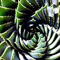 Cactus by Dragica  Micki Fortuna