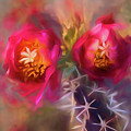 Cactus Flower 07-003 by Scott McAllister