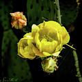Cactus Flower 07-010 by Scott McAllister
