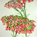 Cactus Flower 3 by Kandyce Waltensperger