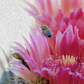 Cactus Flower And A Busy Bee by Amy Sorvillo