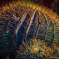Cactus by Harry Spitz