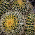 Cactus Hay by David Levin