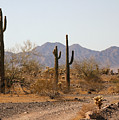 Cactus Line Dirt Road by Bill Mollet