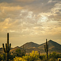 Cactus Morning by Don Schwartz