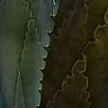 Cactus Outlined by Robert VanDerWal