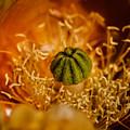 Cactus Pistil by Robert Bales