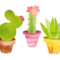 Cactus Plants In Pretty Pots by Little Bunny Sunshine