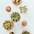 Cactus Pots by Happy Home Artistry