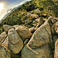 Cactus Rock by Blake Richards