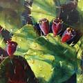 Cactus Shadows by Cynthia Westbrook
