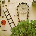 Cactus by Sheep McTavish
