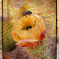 Cactus Spring Beauty W Frame by Beverly Guilliams