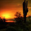 Cactus Sunrise by Saija  Lehtonen