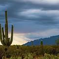 Cactus Sunset Saguaro National Park Arizona by Lawrence S Richardson Jr