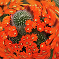 Cactus Swirl by Alison Stein