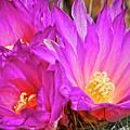Cactus-thelocactus Macdowellii by Saija  Lehtonen