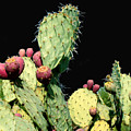 Cactus Two by Wayne Potrafka