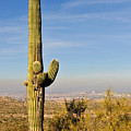 Cactus View by Tom Dowd