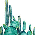 Cactus Watercolor 1 by Color Color
